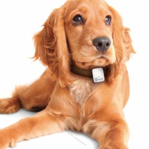 Doplnky pre psov